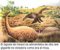 Aguila de Haast
