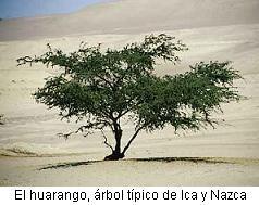 arbol huarango
