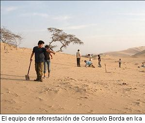 reforestacion huarango