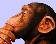 Mono escéptico