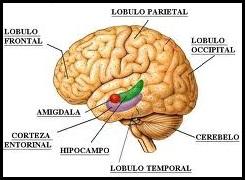 La fuente de la Eterna Juventud Cerebro-humano