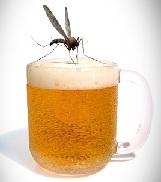 mosquito pica cerveza