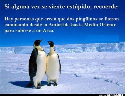 pinguinos estupidos