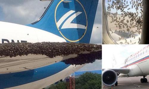 Abejas contra el avión