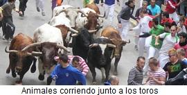 Animales corriendo delante de los toros