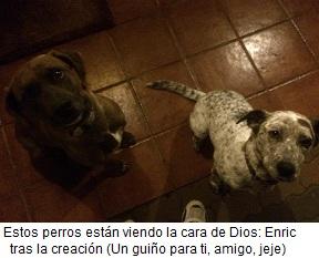 Los perros de Enric